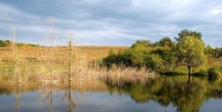 drzewa waterscape Zdjęcie Stock