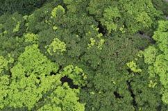 Drzewa widzieć od above zdjęcie stock
