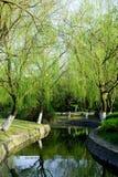 drzewa wierzbowi Obrazy Stock