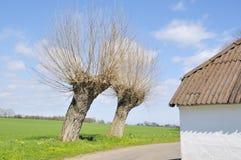 drzewa wierzbowi Fotografia Royalty Free