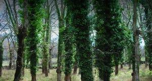 Drzewa wojsko Zdjęcie Royalty Free