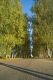 Drzewa wzdłuż drogi Zdjęcie Stock