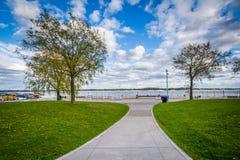 Drzewa wzdłuż przejścia przy Harbourfront w Toronto, Ontario Fotografia Royalty Free