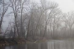 Drzewa wzdłuż rzeki na Mglistym zima ranku Obraz Stock