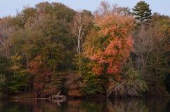 Drzewa wzdłuż rzeki w jesieni Obrazy Stock