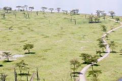 Drzewa wzdłuż wijącej drogi gruntowej Zdjęcia Royalty Free