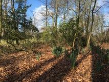 Drzewa wzrasta up w słońcu Zdjęcie Stock