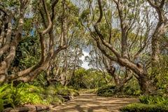 Drzewa z ścieżką Zdjęcia Stock