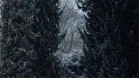 Drzewa z śniegiem na nim fotografia stock