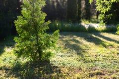 Drzewa z świeżym zielonym leafage w małym miasto parku pod słońca li Obraz Stock
