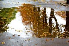 Drzewa z brąz jesieni liśćmi odbijają w kałuży podczas rain_ obrazy royalty free