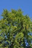 Drzewa z jesiennymi liśćmi Zdjęcie Royalty Free