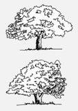 Drzewa z liśćmi royalty ilustracja