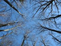 drzewa z nieba Zdjęcie Royalty Free