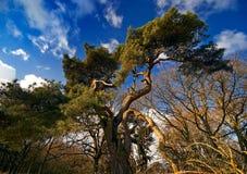 drzewa z nieba Zdjęcia Stock