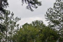 Drzewa z niebem Obrazy Stock