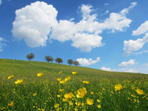 Drzewa z niebieskim niebem i chmurami (28) Obraz Stock