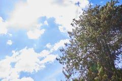 Drzewa z niebieskim niebem zdjęcia royalty free