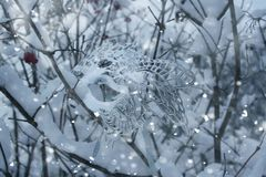 Drzewa z śniegiem Fotografia Royalty Free