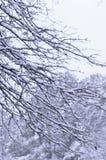 Drzewa z śniegiem Obraz Royalty Free