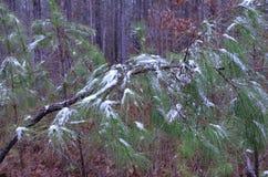 Drzewa z śniegiem Zdjęcia Stock