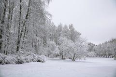 Drzewa z śniegiem w zima parku Fotografia Royalty Free