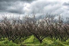Drzewa z rzędu zdjęcie royalty free