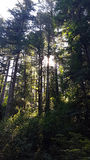 Drzewa z słońca jaśnieniem Zdjęcia Stock