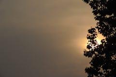 Drzewa z słońcem Obraz Stock