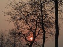 Drzewa z słońcem Zdjęcia Royalty Free