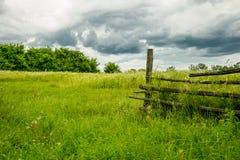 Drzewa z zieloną trawą na niebieskiego nieba tle Obraz Royalty Free