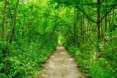 Drzewa z zieloną trawą na niebieskiego nieba tle Zdjęcie Stock