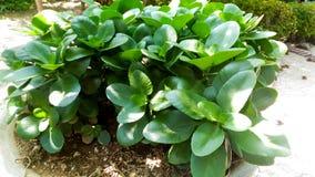 Drzewa z zielonymi liśćmi, krzaki w garnku zdjęcie stock