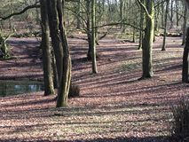 Drzewa z zmierzchem Zdjęcie Stock