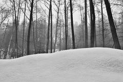 Drzewa za śnieżną diuną w Peklo dolinie w Machuv kraju regionie podczas zima czecha Obraz Stock