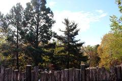 Drzewa Za Drewnianym ogrodzeniem Obraz Royalty Free