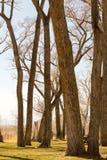 Drzewa zaczyna kwitnąć tuż przed wiosną fotografia royalty free