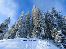 Drzewa zakrywający śniegiem w Alps, Austria las Obrazy Royalty Free