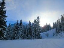 Drzewa zakrywający śniegiem w Alps, Austria las Obraz Royalty Free