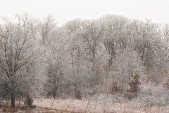 Drzewa zakrywający w lodzie po lodowej burzy zdjęcie stock