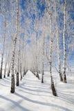 Drzewa zakrywający z śniegiem Fotografia Stock