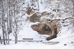 Drzewa zakrywający z śniegiem i jamą w śnieżnym lesie w Latvia Fotografia Royalty Free