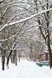 Drzewa zakrywający z śniegiem w jardzie obrazy stock