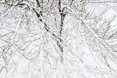 Drzewa zakrywający z śniegiem, zimne zimy Zdjęcie Stock