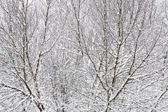 Drzewa zakrywający z śniegiem, zimne zimy Obrazy Royalty Free