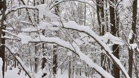 Drzewa zakrywający z świeżym śniegiem w śnieżnym zima dniu i zimnie zbiory wideo