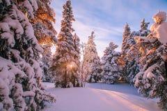 Drzewa zakrywający z hoarfrost i śniegiem w zim górach obrazy stock