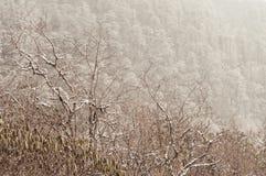 Drzewa zakrywający z puszystym śniegiem podczas zimy Biały śnieg na lasowych drzewach w zimnej zimy jaskrawym słonecznym dniu Wie zdjęcie royalty free