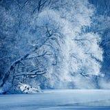 Drzewa zakrywający z hoarfrost Zdjęcia Royalty Free
