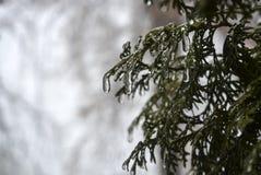 Drzewa zakrywający z lodem Zdjęcie Royalty Free
